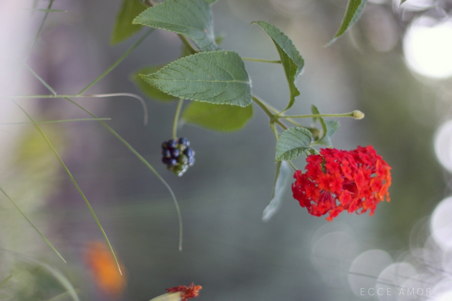 Jardin Samedi Saint - Ecce Amor