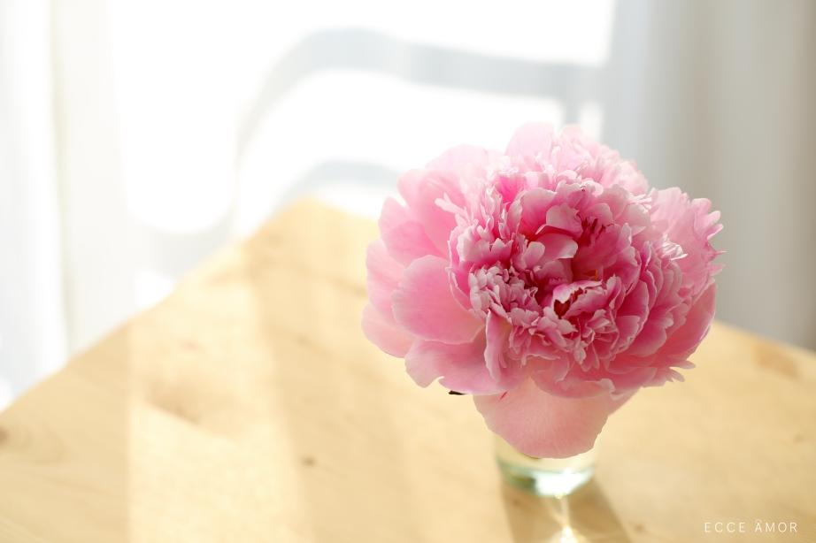 Pivoine fleur - Ecce Amor